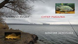 ФИДЕР ЗИМНЯЯ ЭКЗОТИКА Зимняя РЫБАЛКА 2021 Карась и Тилапия