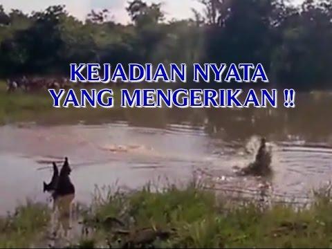 VIDEO KEJADIAN NYATA