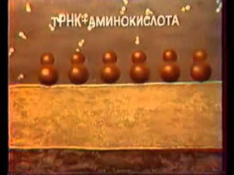 ЭПС и Аппарат Гольджи