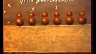 ЭПС и Аппарат Гольджи(http://paramitacenter.ru/content/molekulyarnaya-biologiya-video-podgotovka-k-ege - Видео по молекулярной биологии., 2012-06-08T12:42:08.000Z)