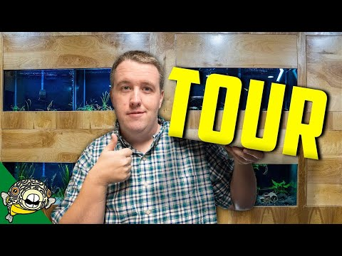 MY NEW FISH ROOM TOUR!  ALL THE TANKS!