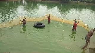 Fish Catching with Big Net, बड़े जाल से मछली पकड़ना