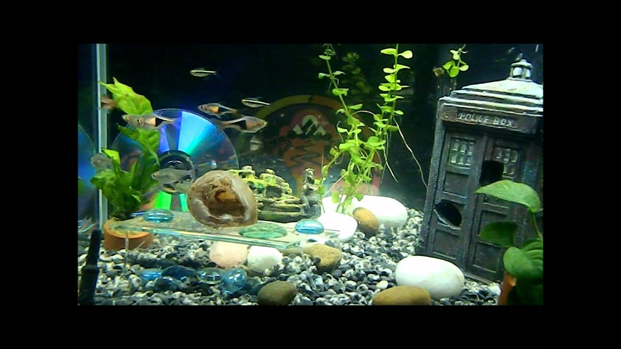 Funny Fish Tank Decorations Doctor Who Fish Tank Youtube