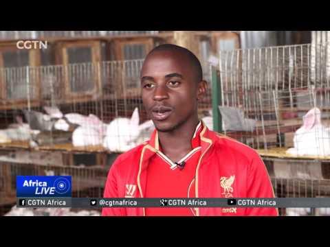Ugandan farmers cash in on rabbit farming