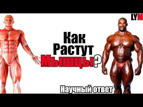 Как растут мышцы - LYM