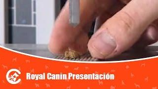 Royal Canin Presentación