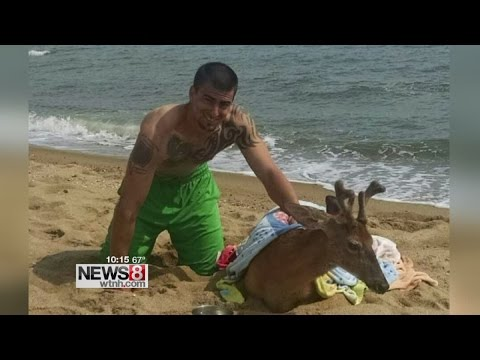 Deer rescued from Long Island Sound