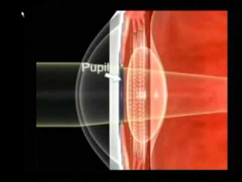 Anatomia Del Ojo - YouTube