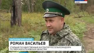 Вести-Псков 09.08.2016: выявление нарушений земельного законодательства в Пыталовском районе