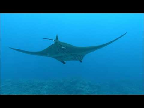 [10 Hours] Tropical Scuba Diving [1080HD] SlowTV