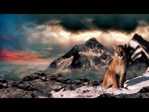 Mountain Lion - Speedart