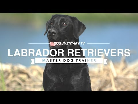 MASTER DOG TRAINER: LABRADOR RETRIEVERS