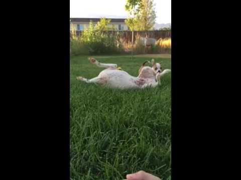 More Gizmo & Orbit playtime