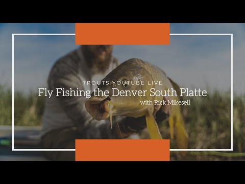 Trouts Live | Fly Fishing The Denver South Platte With Rick Mikesell