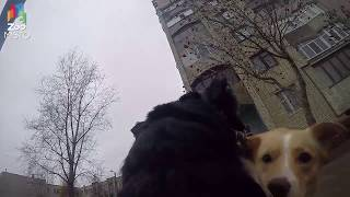Цвергшнауцер - Мир глазами собаки / GoPro and Zwergschnauzer - Go pro dog