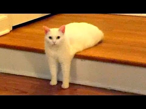 Pranks with cats-funny cats cat and cat 2017