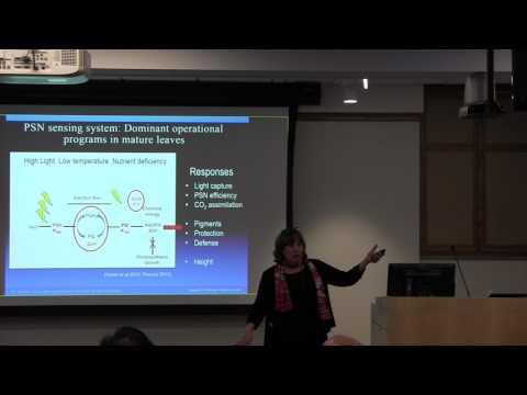 Tessa Pocock: Light Matters - Sensing and Signaling in Plants