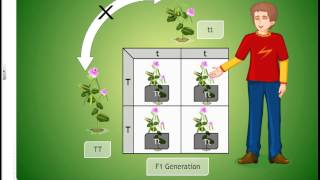 cbse class 10 Heridity and Evolution, mandel experiments and sex determination animated video