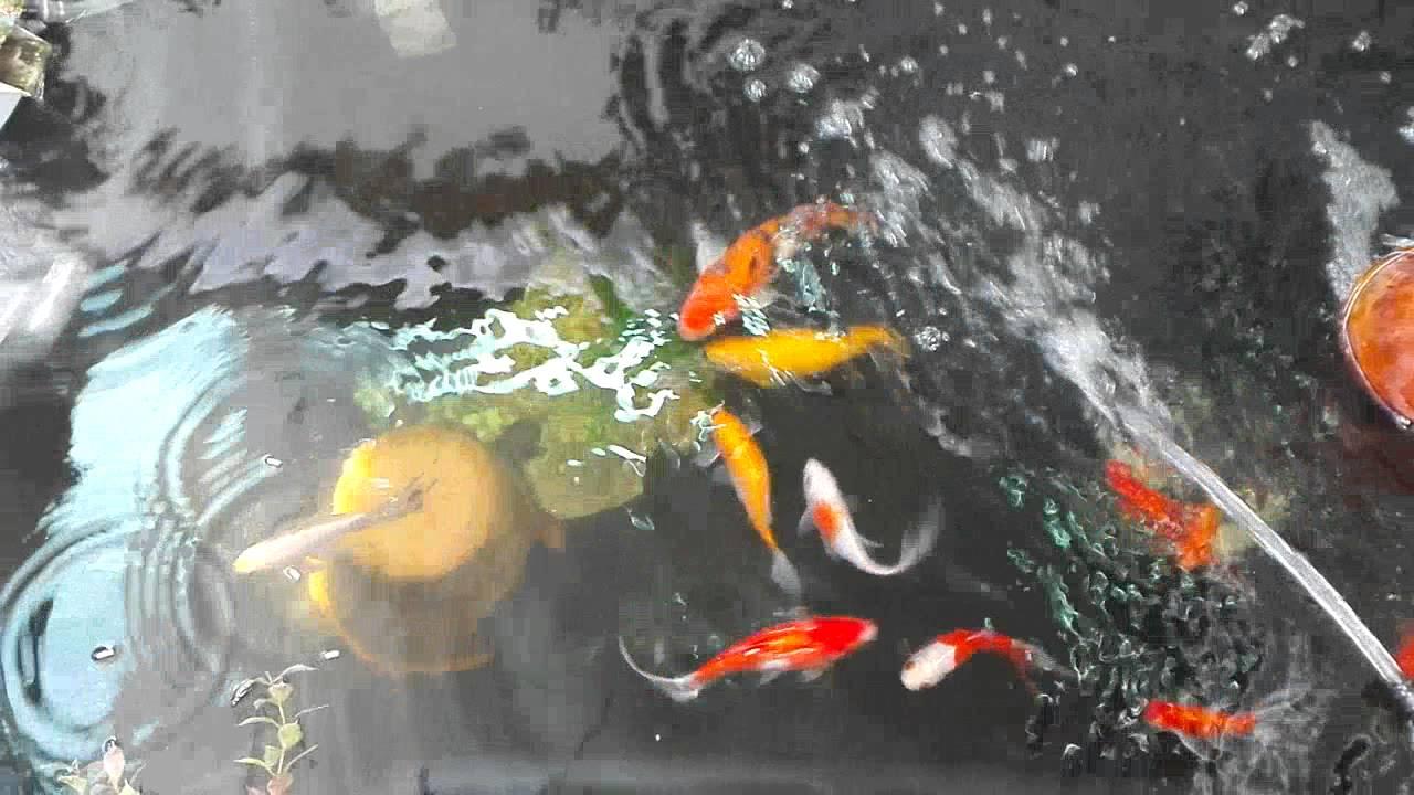 Estanque de peces youtube for Estanque de peces