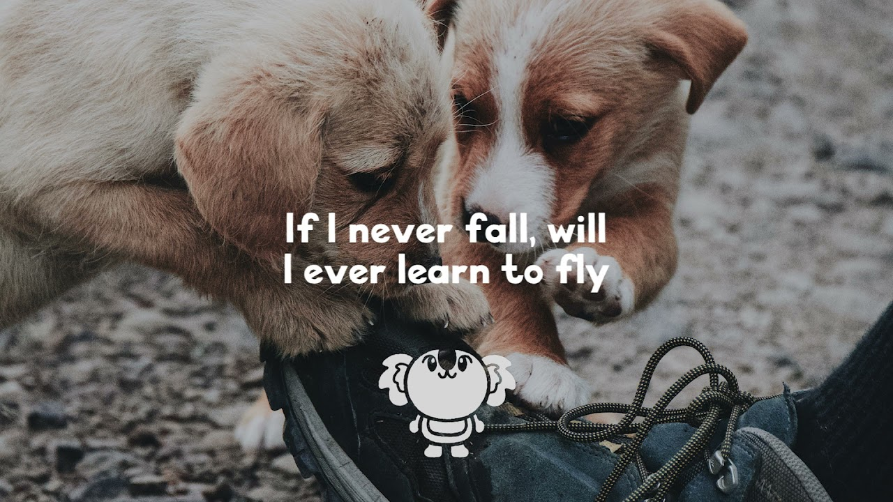 Francis Karel - Fall (lyrics)