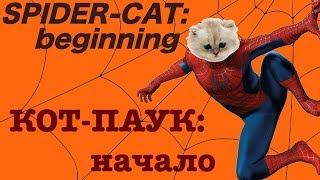 Funny Cats #18.Смешные Коты 2019, Кошки 2019. Spider-Cat. Кот-Паук. lol.