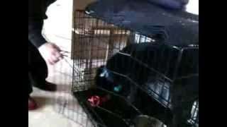 caged animal....storm