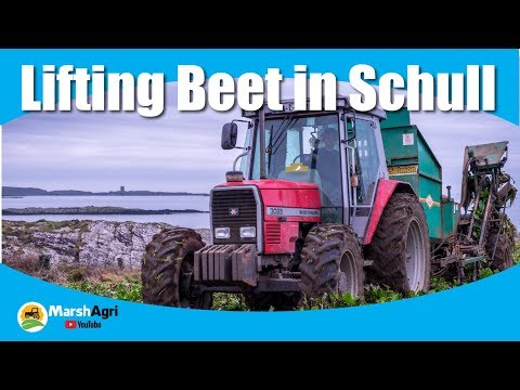 Massey 3085 Lifting Beet and a Fendt 716 drawing in Schull, West Cork