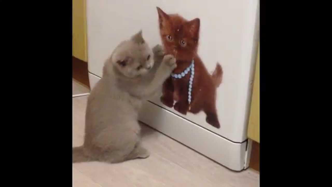 Принимается резерв британских котят, 26 декабря 2017 158. Хабаровск. Британская кошка. Под заказ · красная британская кошка. Под заказ. 26 декабря 2017 919. Владивосток. Британская кошка. 2 000 р. Продам котят британцев, 26 декабря 2017 157. Партизанск. Британская кошка. Британская девочка.