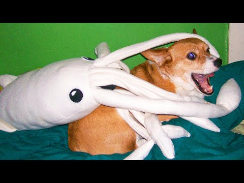 Best Funny Cats 😹 And Dogs 🐶 Videos - Try Not To Laugh!