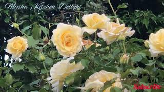 New Romantic Indian Ringtone 2021/ Best Love Ringtone/ Mp3 mobile tone/ Copyright Free/Hindi tone 4k screenshot 3