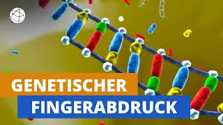 Wie funktioniert der genetische Fingerabdruck? - Planet Schule - SWR