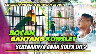 Download lagu LOVEBIRD KONSLET INI DIGANTANG BOCAH..❗