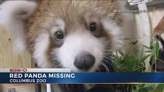 Red Panda Missing