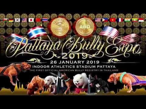 PATTAYA BULLY EXPO 2019