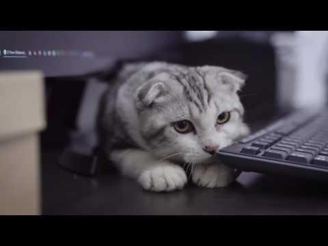 Scottish Fold - Cats are cute!