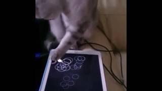 Кошка играет в планшет