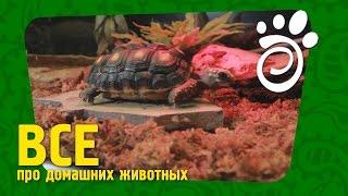 Условия Для Черепахи (Часть Первая). Все О Домашних Животных
