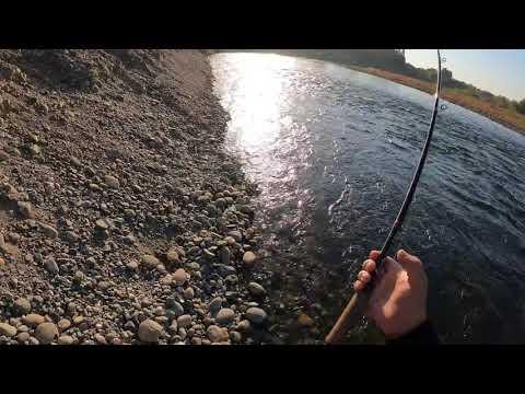 American River Salmon Fishing 2020