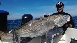 Pesca de corvina de 40kg