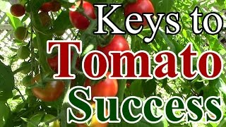 2 Min. Tip: Our Keys to Tomato Growing Success