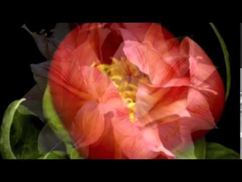 Живые цветы   Автор НАТАЛИ НАТУЛЯ