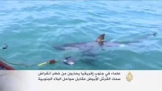 علماء يحذرون من خطر انقراض سمك القرش الأبيض