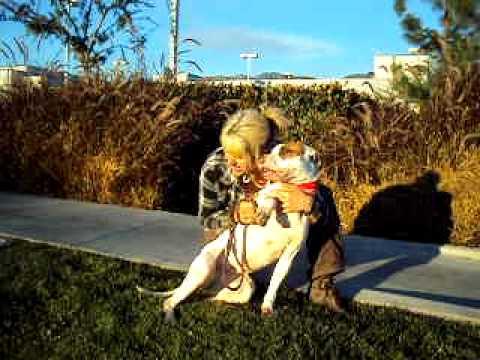 Pacific Coast Dog Rescue