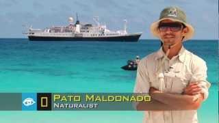 Galápagos Beach: Where Wildlife Finds You