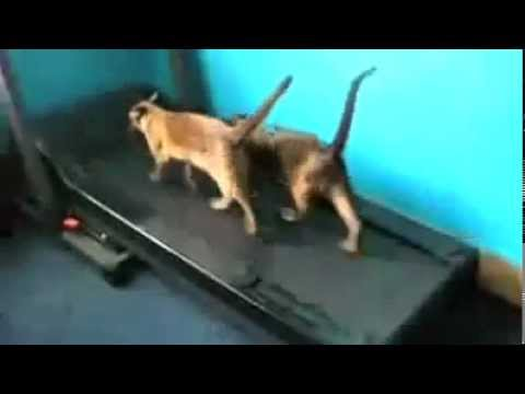 Funny Cat Video's - (Cats doing silly things on video)