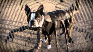 Mutant Giant Spider Dog SpiderDogMania prank