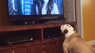 Bulldog Frantically Tries To Protect Children In Some Of Horror's Creepiest Scenes!
