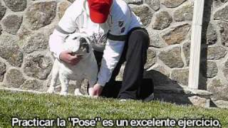 Cuidados Básicos Bulldog Ingles Basic English Bulldog Care Www.elbulldogingles.es