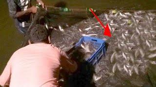 Awesome Night Fishing Trap | Freshwater Fish Trap Using Mosquito Net | NatureOfBD