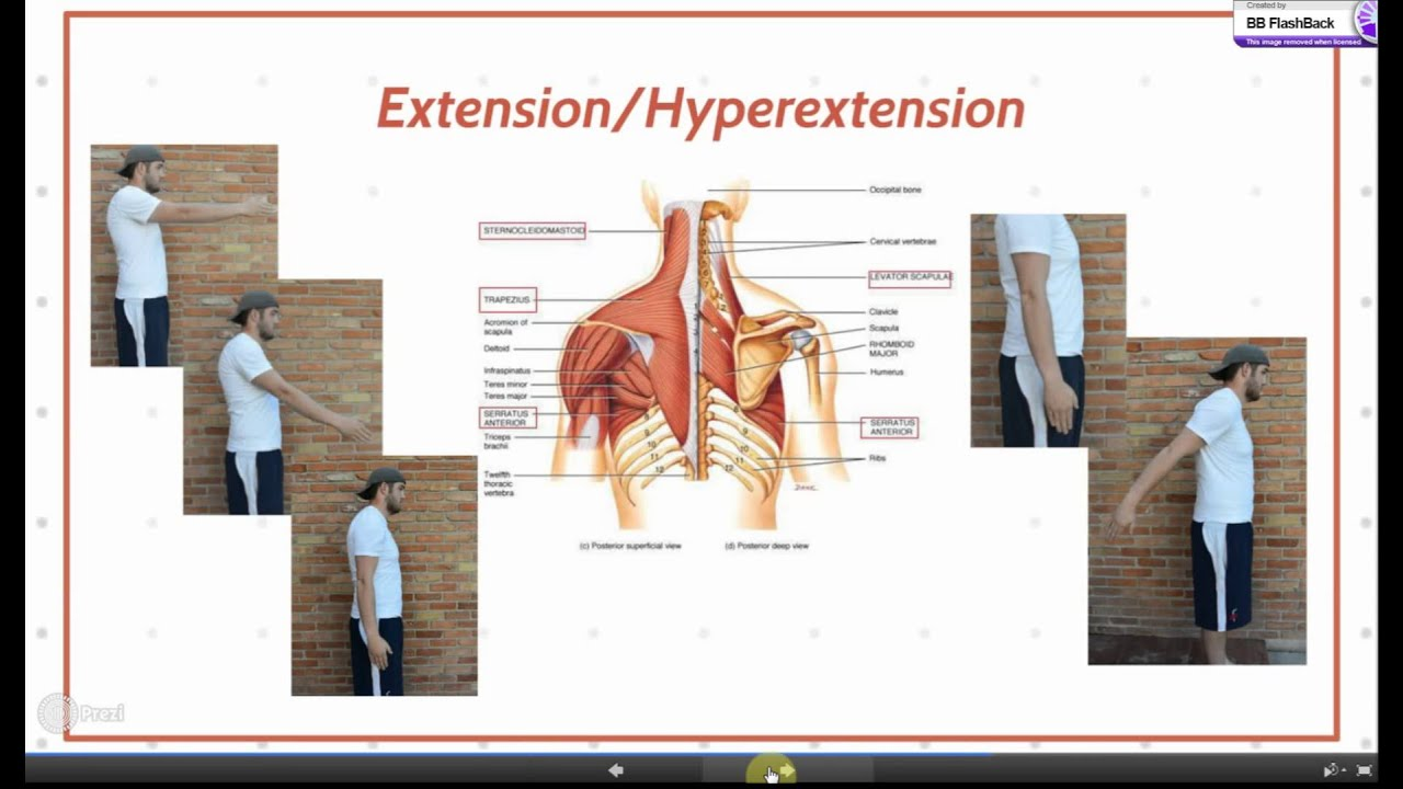 Flexion And Extension Of Shoulder Joint Youtube